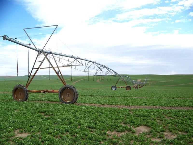 An alfalfa field near Richland, Wash., Mar. 30, 2011.