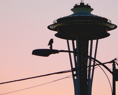 Bird perching on an apparently non-electrified Seattle streetlight  5/9/09