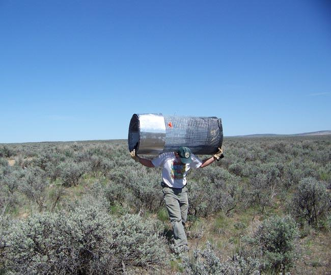 Dan Peterson a wildlife area manager for Washington Department of Fish & Wildlife carries a pygmy rabbit enclosure on his shoulders across long stretches of sagebrush.