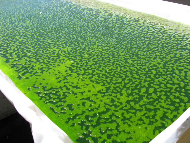 Algae mini pond. Advanced-generation biofuels are generally derived from non-food biofeedstocks using new biomass-to-fuel-conversion technologies. Some examples of fuel sources for second-generation biofuels are algae, camelina,