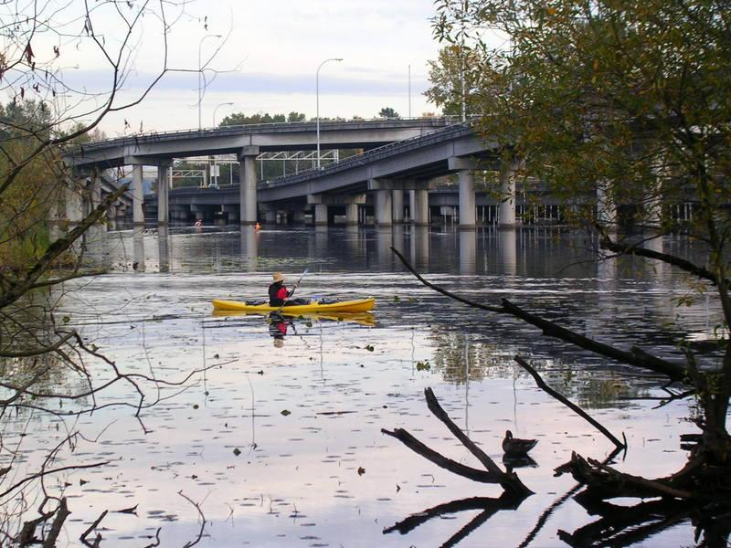 A kayaker paddles through the waters of Union Bay near the west end of the 520 bridge in the Washington Park Arboretum.