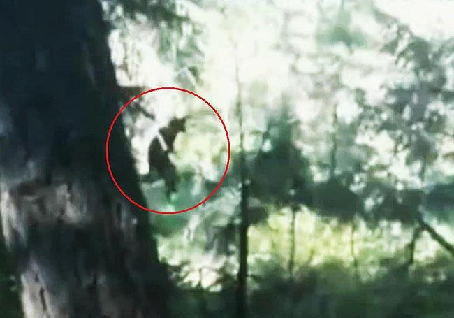 A Spokane-area woman identified only as Samantha captured a video of what she claims is Bigfoot on her iPhone.