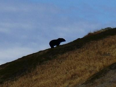 U.S. Fish and Wildlife Service says a hiker's photo confirms a sighting of a grizzly bear in North Cascades.