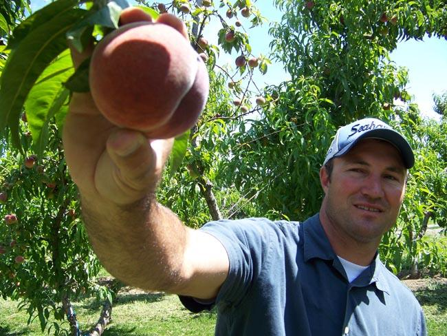 John Douglas shows off a peach from one of his family's fruit ranches near Basin City, Wash.