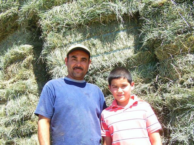 Victor Santillan, standing with his son Diego, loads alfalfa hay on large trucks near Eltopia, Wash. He says 9/11 made him appreciate the United States, but those events and the changes that came after made life harder for many Hispanics here.