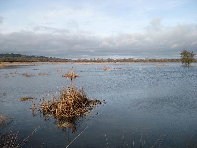 Nisqually Wetlands