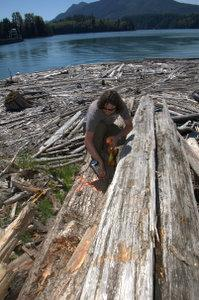 Florian Leischner, salmon recovery biologist for the Nisqually Tribe, marks a tree donated by Tacoma Public Utilities, for use in a habitat restoration project in 2008.