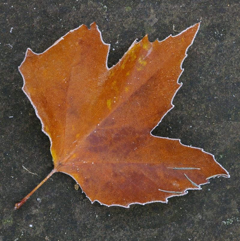 Dry and cold, often means frost