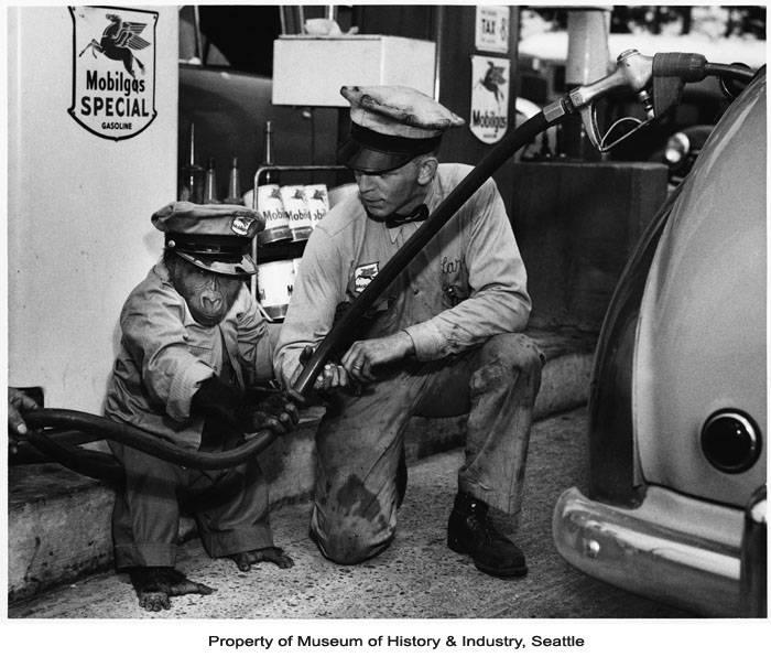 Bobo the gorilla in gas station attendant costume at Mobil gas station in Anacortes,WA. 1952.