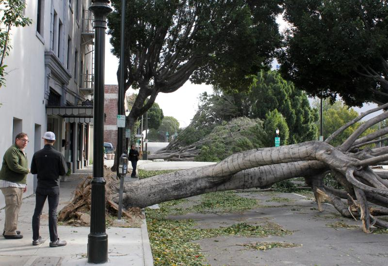 Pedestrians, left, view trees blown over during a wind storm Thursday in Pasadena, Calif. High winds caused by the high pressure over Seattle flipped over trees and trucks and knocked out power to more than 300,000 California.