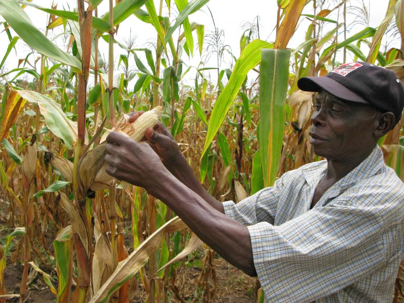 Joseph Dzindwa checks his hybrid maize crop in Catandica, Mozambique, earlier this year.