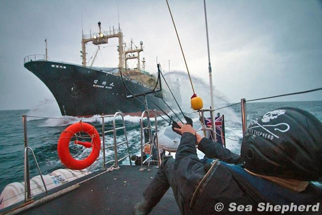 A Sea Shepherd crew tangles with a Japanese whaling ship in Antarctic waters in 2011