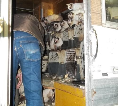 Cats being rescued from a camper in Auburn. 1/26/12