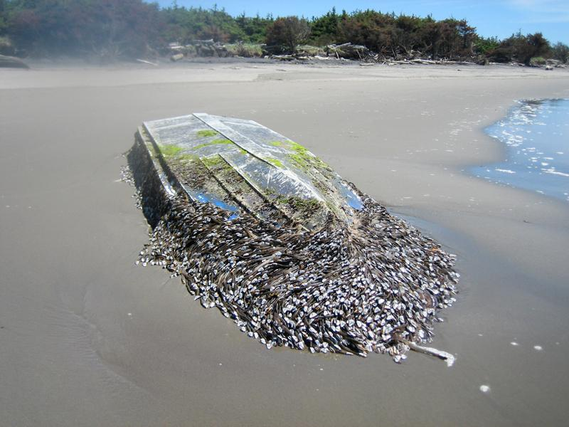 As suspected, this boat discovered at Cape Disappointment State Park on Friday was from Japan.