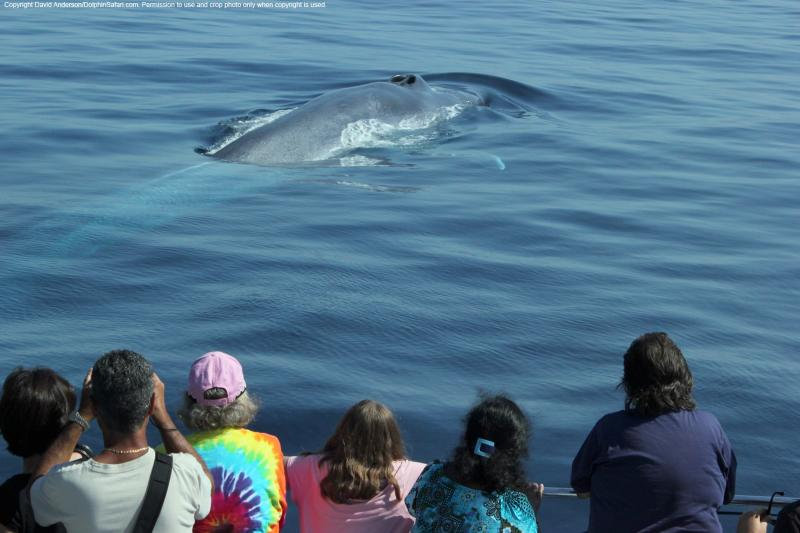 Captain David Anderson, who runs Dolphin and Whale Safari in Dana Point, Calif., shared this photo of spectators watching whales off the coast of southern California.