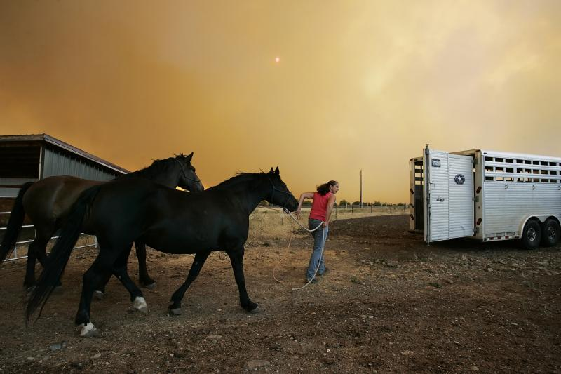 Horses escaping the Taylor Bridge Fire