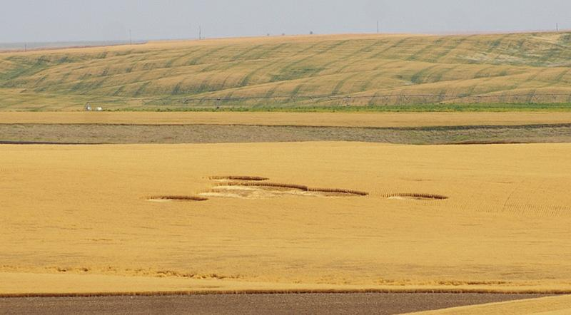 Another view of the Wilbur crop circles.