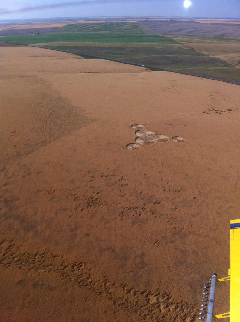 Crop circles approx. 5 miles northwest of Wilbur in Greg and Cindy Geib's wheat field.