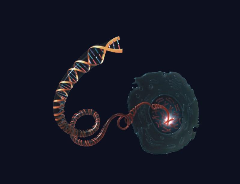 DNA molecule unwinding from inside the nucleus of a cell.