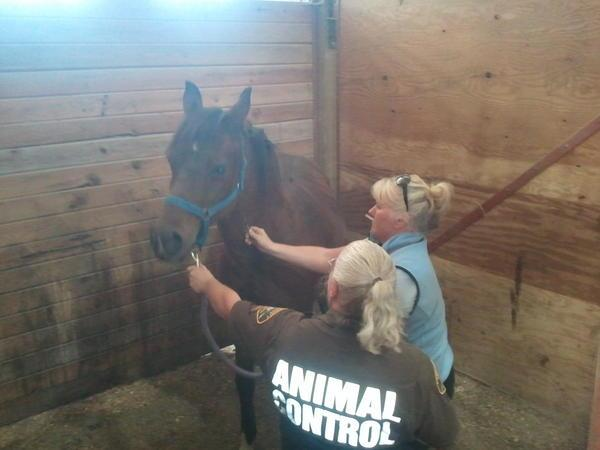 """""""Animal control and Vets work on a horse - From a flea bag hotel to the Hilton,"""" said Ed Troyer of the Pierce County Sheriff's Department."""