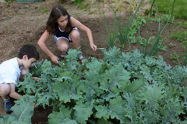 More senes like this one, of chidren harvesting kale, would help the Northwest sustain itself into the future, says Seattle City Councilmember Richard Conlin.