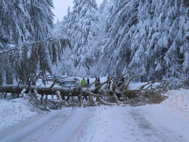 Wet, snowy and windy weather caused nearly 100 trees to crash down across Mount Baker Highway just west of the ski area.