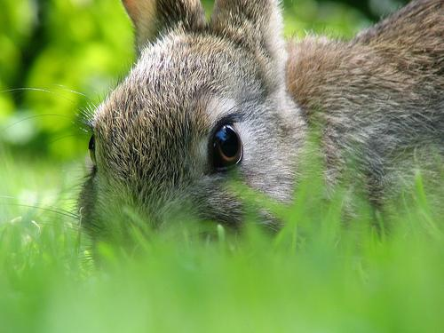 Pet owners are encouraged to get their bunny spayed or neutered to prevent surprises.