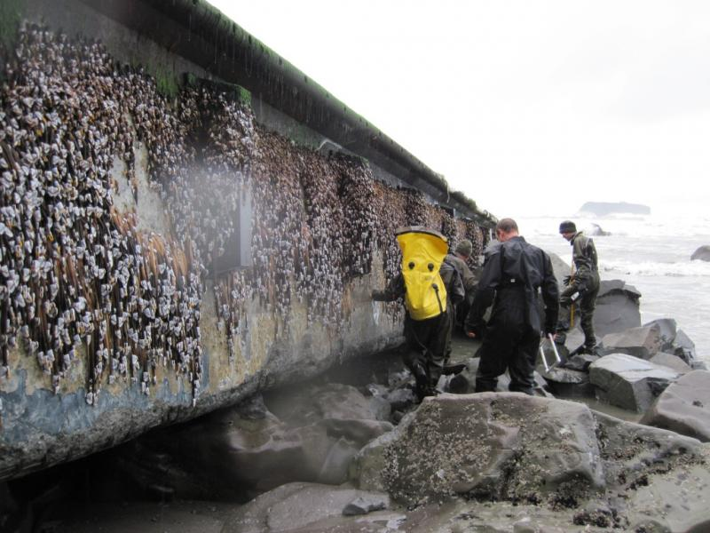 Members of the Washington tsunami debris experts team inspect a dock Friday Dec. 21, 2012 that apparently floated from Japan after last year's tsunami and just washed ashore on a Washington beach near Forks Tuesday.