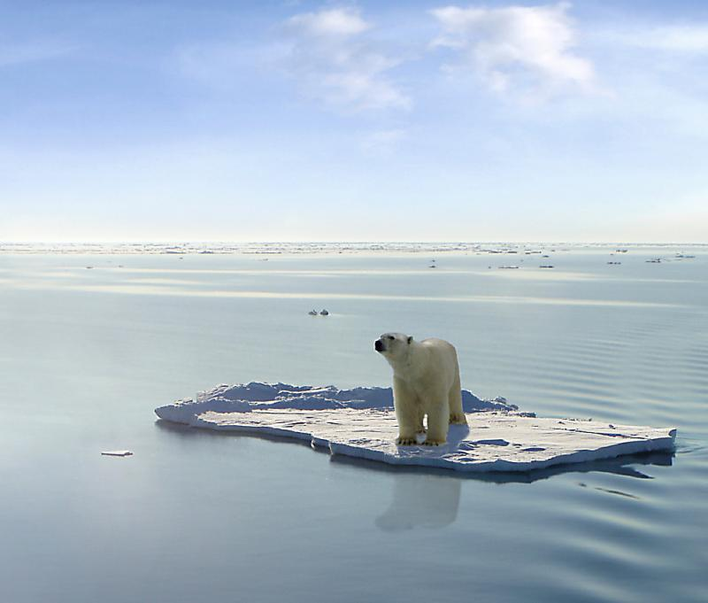 A polar bear on one of the last ice floes floating in the Arctic sea in June 2008.