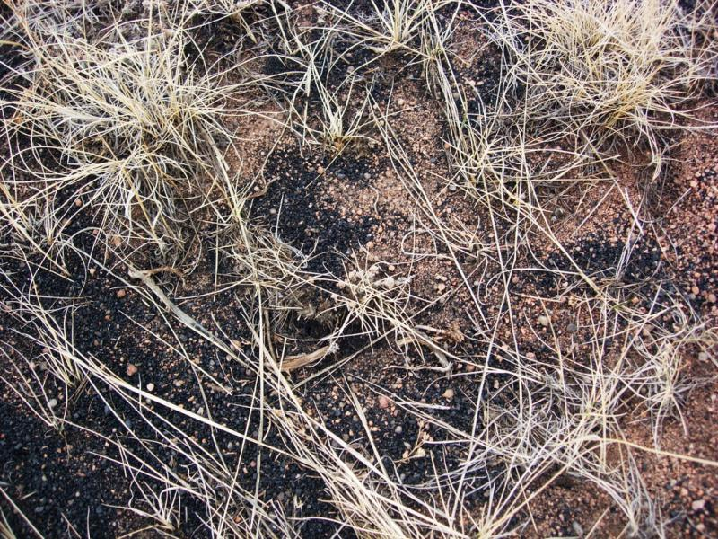 Coal dust mingles with grass in Wyoming.