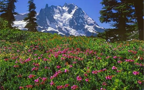 Mount Shuksan in North Cascades National Park