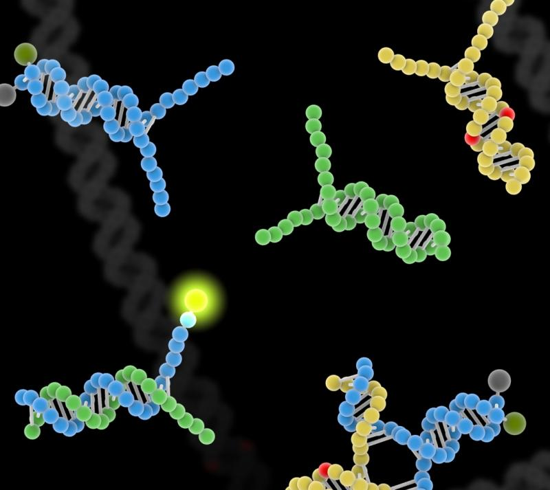 A rendering shows how synthetic DNA bonds with real DNA, revealing the presence of a flaw.