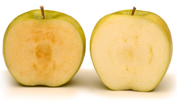 "This photo shows a ""conventional"" apple, left, next to an apple that has been genetically modified to slow browning."