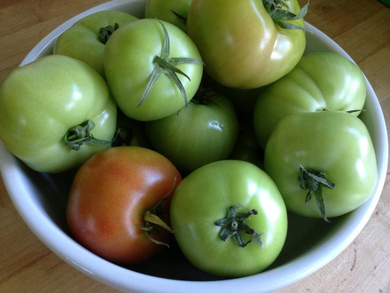 Nancy's (mostly) green tomatoes