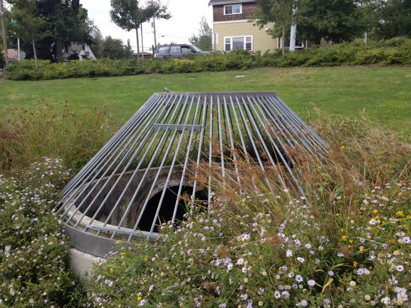 A drain in the center of the park connects to the city's storm drain infrastructure.