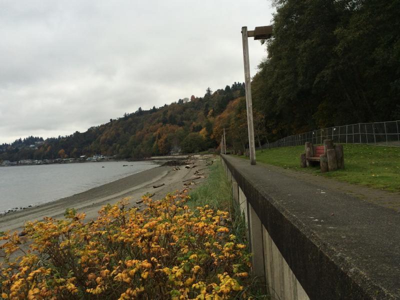 The 40-year-old seawall at Burien's Seahurst Park is an example of development that prevents salmon and other sensitive species from thriving in Puget Sound.