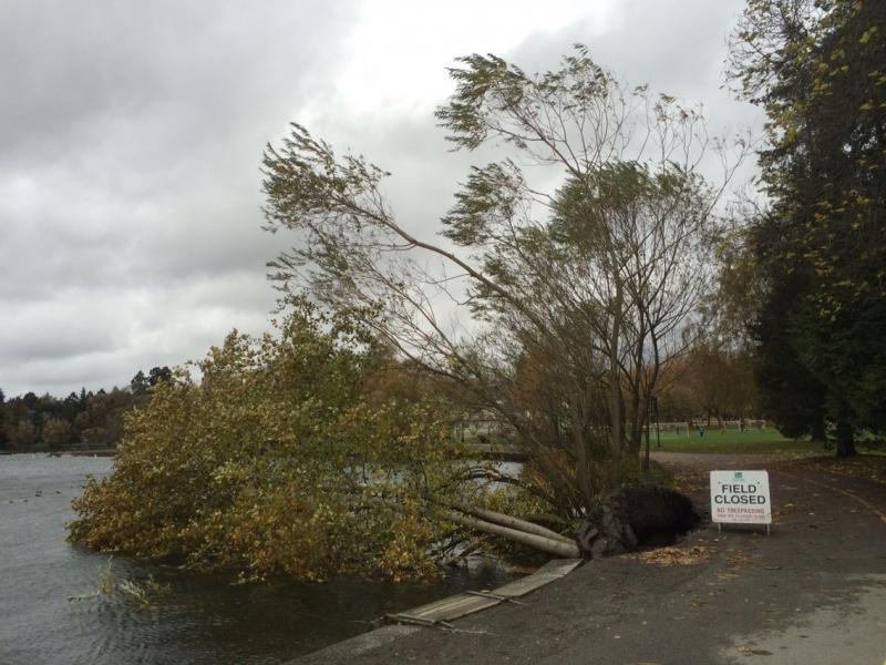 """Quite blustery at Greenlake earlier today–you could almost lean in to the wind. Huge waves!"" says Bellamy Pailthorp."