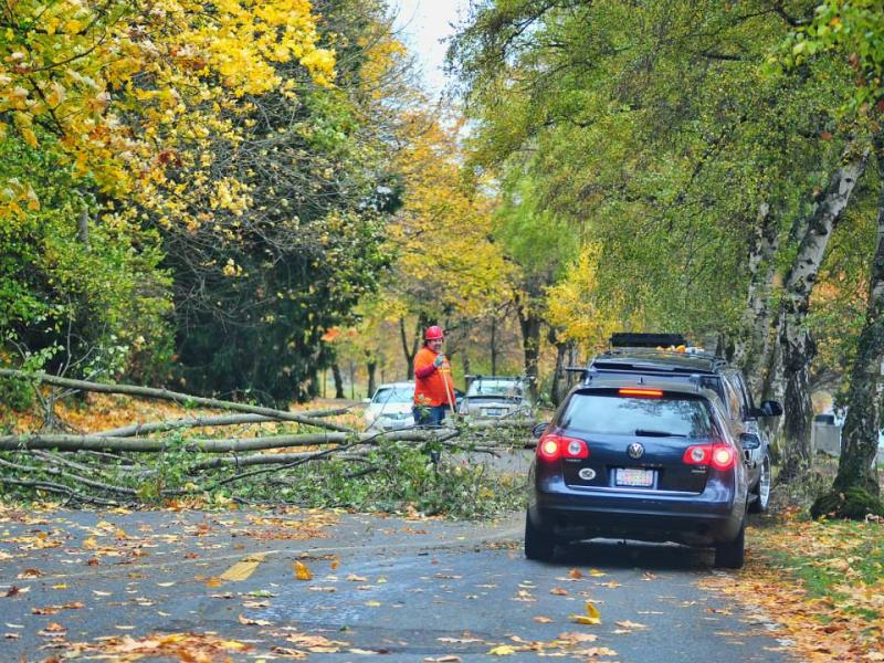 Downed tree branches on Lake Washington Blvd. in Seattle.