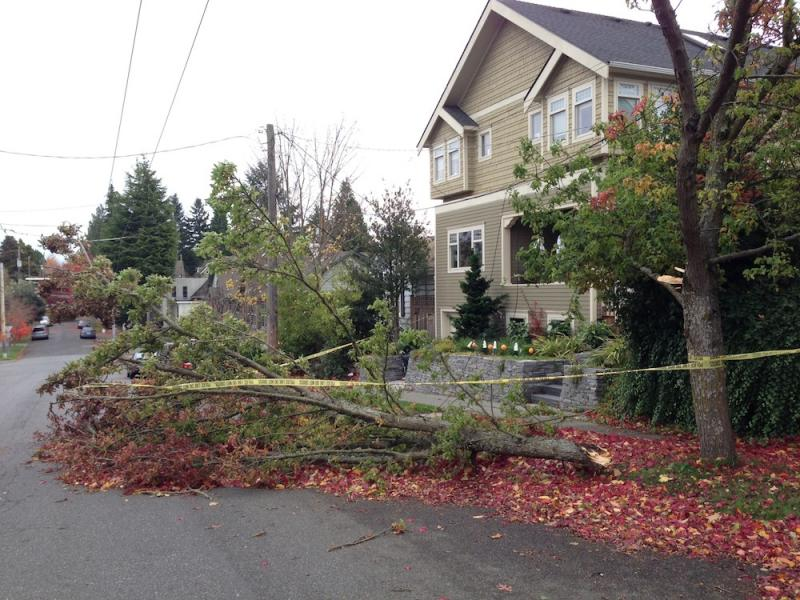 A downed tree in Seattle's Queen Anne neighborhood.