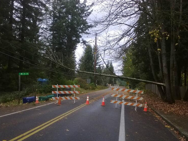 A downed tree shut down 244th on the Sammamish Plateau.