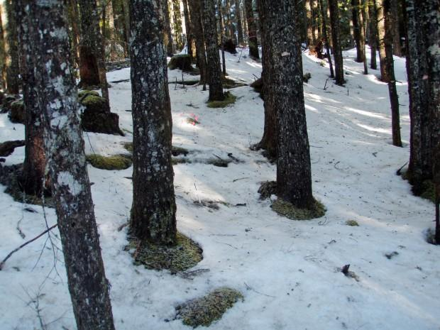 UW reserahcres found that in temperate climates, snow melts faster under trees than in clearings.