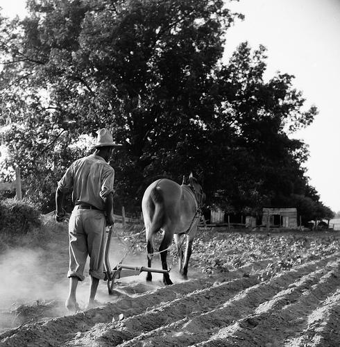 Plowboy in Alabama earns 75 cents daily.