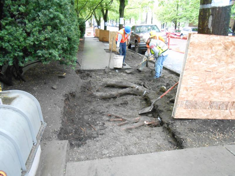 A Seattle crew working on a repair, getting ready to cut roots.