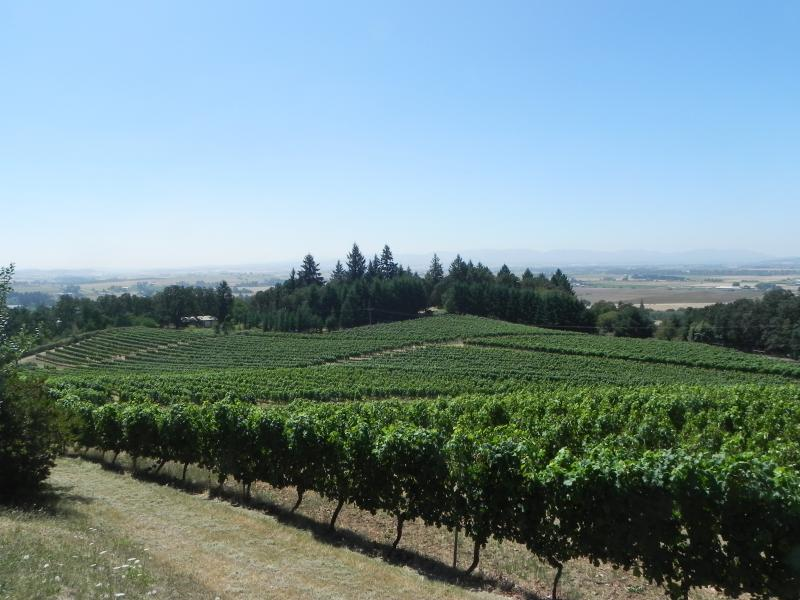 This August 2012 photo shows vines spilling down toward the Willamette Valley at Amity Vineyards in Amity, Ore.