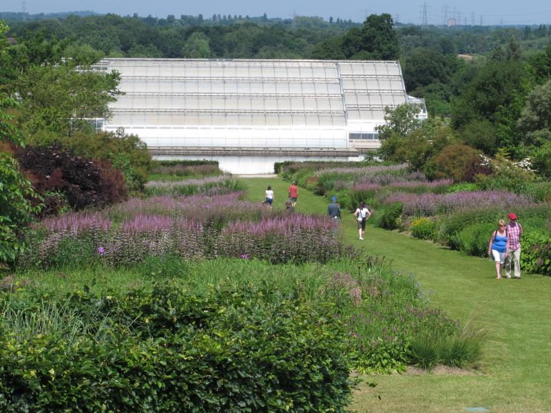 Wisley Glasshouse Borders are Piet Oudolf designed borders inspired by the prairie.  Oudolf designs in masses of perennials and grasses chosen for color and structure  to also create habitat for birds in particular.  Plants are not watered or fertilized.