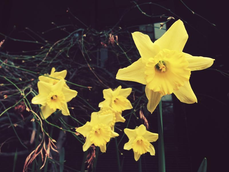 A sure sign of spring approaching: flowers are starting to bloom.