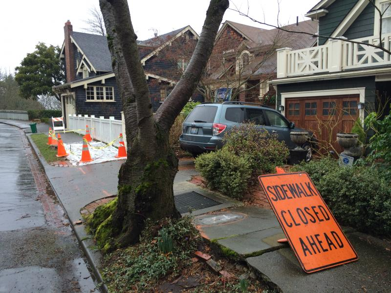 Seattle's Department of Transportation will repair sidewalks damaged by city-owned trees, or work with property owners to get repairs done if residents call the city hotline, 206-684-TREE.