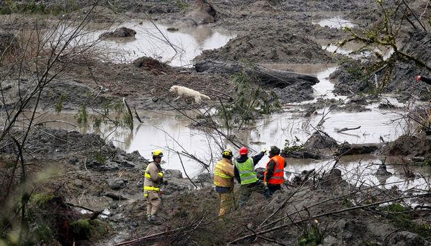 A dog works with searchers at the scene of a deadly mudslide Saturday, March 29, 2014, in Oso, Wash.