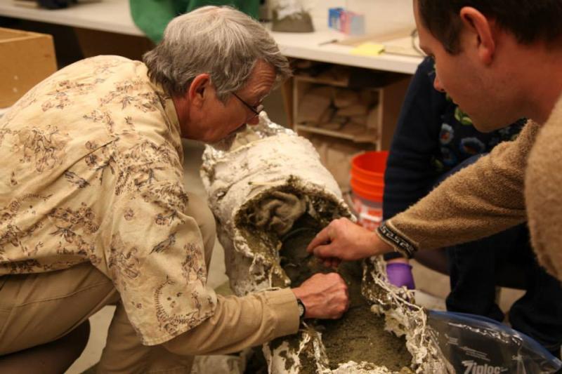 burke museum meet the mammals whose offspring