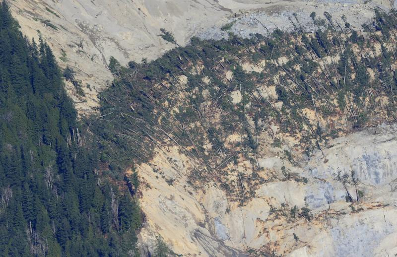 Trees knocked down near the top of the massive mudslide that killed at least eight people and left dozens missing are shown in this aerial photo, Monday, March 24, 2014, near Arlington, Wash.